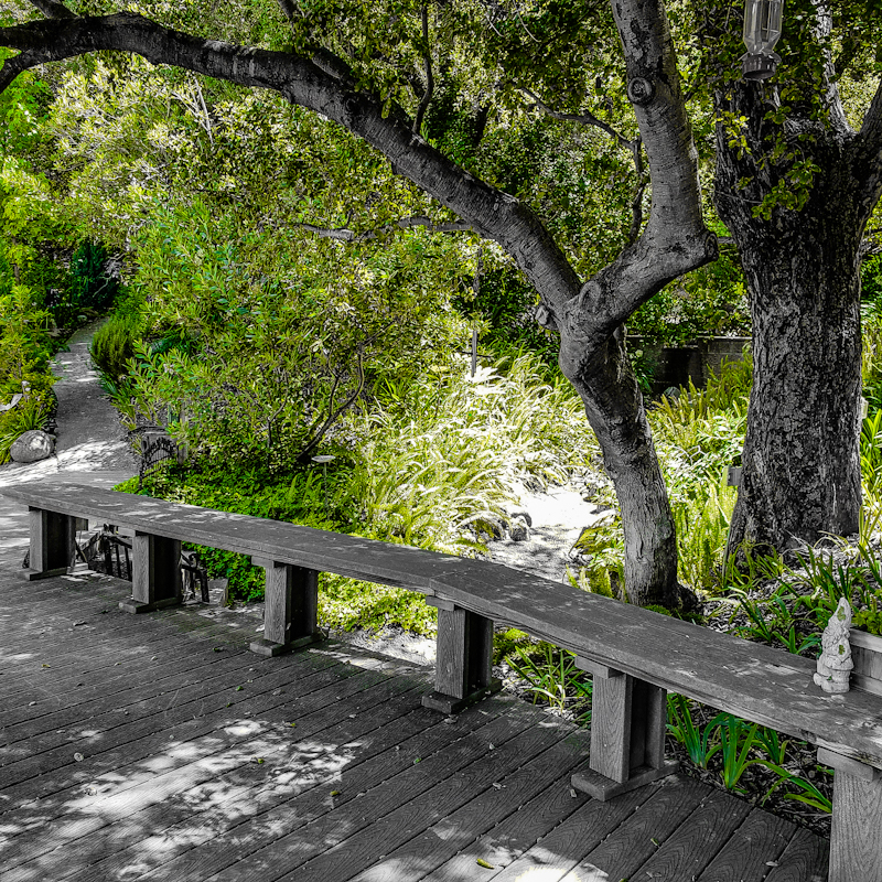 ~The Bench At Hummingbird Oak~